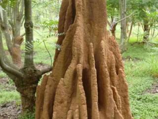 Termites-mound