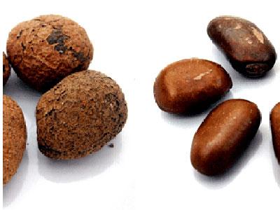 calabash nutmeg