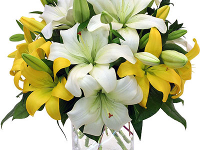 white-and-yellow-lilies