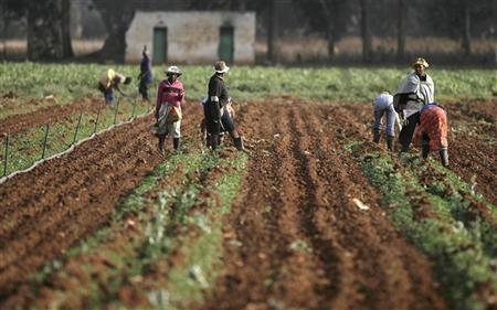 Farm workers on farm Image: Reuters