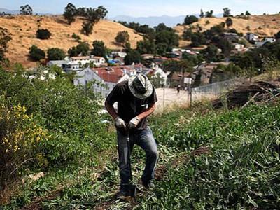 Farmer. Image source treehugger