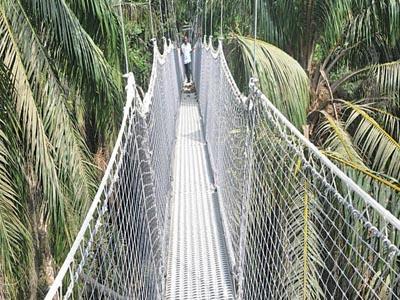 Walk Canopy