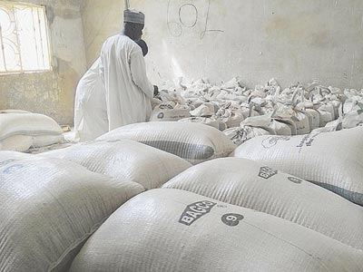 Stored wheat grains in Kebbi State