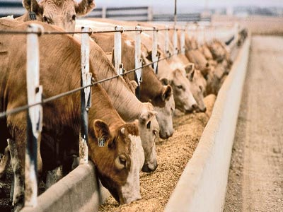 Livestock feeds. Photo; agritechstores