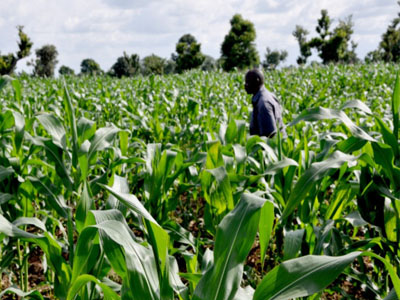 Congo partners IITA, targets 1,000 jobs from agriculture yearly