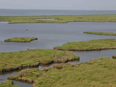 Wetland PHOTO: Wikimedia