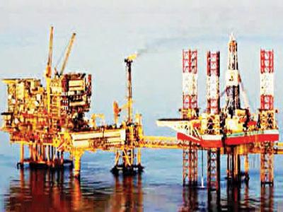 Oil-plant-Copy