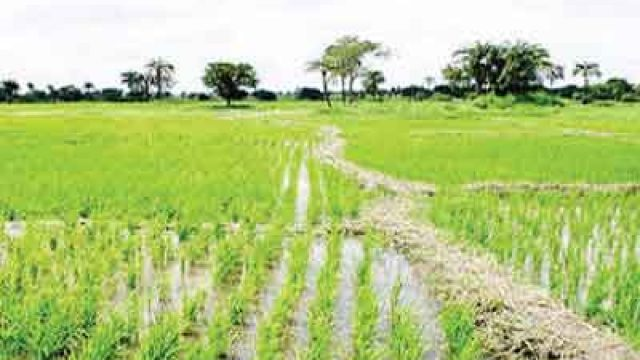 go negosyo rice business plan