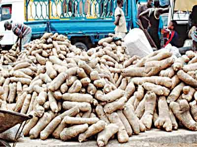 Tubers of yam from Benue farms