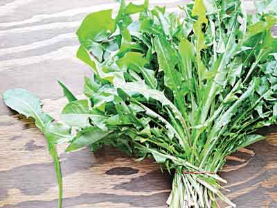 Dandelion greens, from field to
