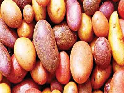 Colourful potatoes