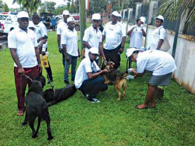 Dogs undergoing vaccination
