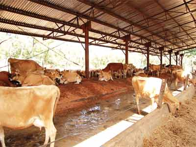 Shonga-farm