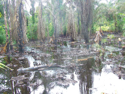 Scene of an oil spill