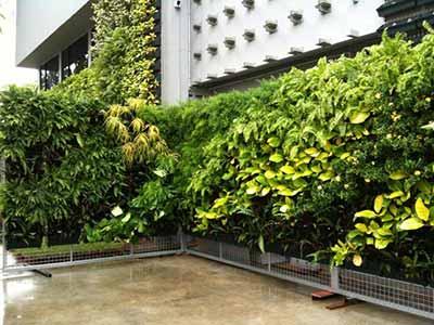 Exterior Green Walls
