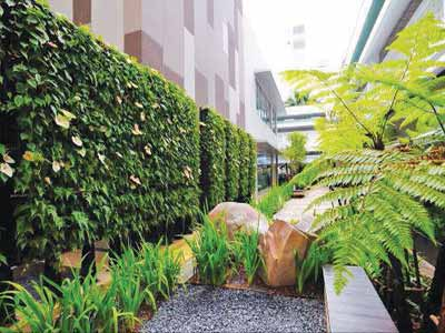 Living wall acts as sunscreen that helps lower ambient temperature in courtyard and reduce heat absorption by the walls.