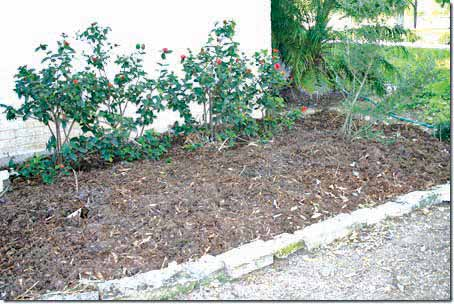 lasagna-gardening-_sheeet-composting