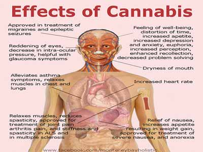 Cannabidol (CBD), a type of cannabinoid, has come into focus as a potential therapy for various conditions, including epilepsy. PHOTO: google.com/search Cannabidol (CBD), a type of cannabinoid, has come into focus as a potential therapy for various conditions, including epilepsy. PHOTO: google.com/search