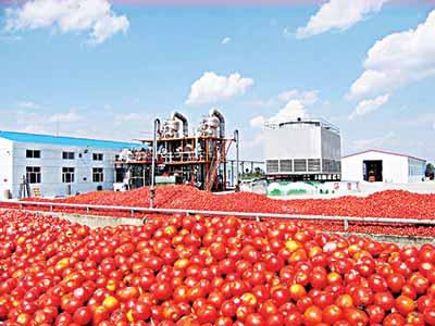 Tomato processing plant PHOTO: google.com