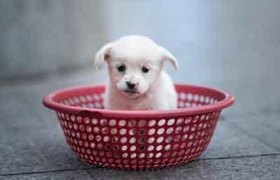 test-tube-puppies