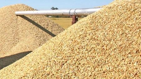 rice-medium-grain
