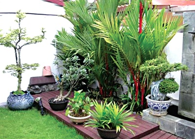 Small indoor garden a tropical paradise with geometric motif.