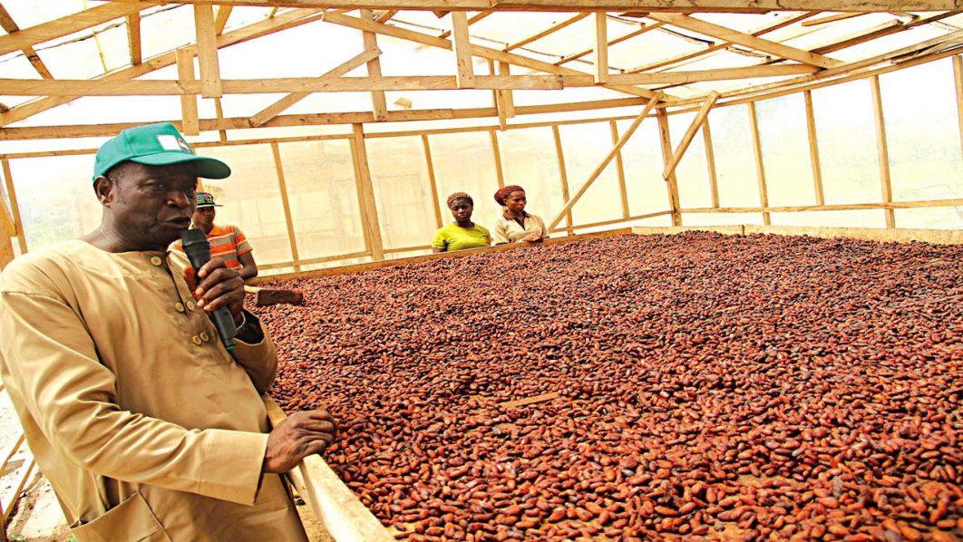 Premium cocoa quality control at CRP, Oda, Ondo state