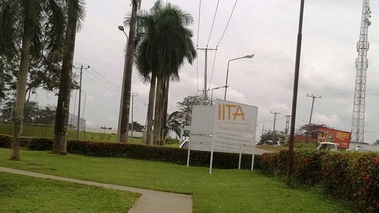 International Institute of Tropical Agriculture, Ibadan.