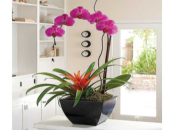 Orchid and bromeliad beautifies interior of home