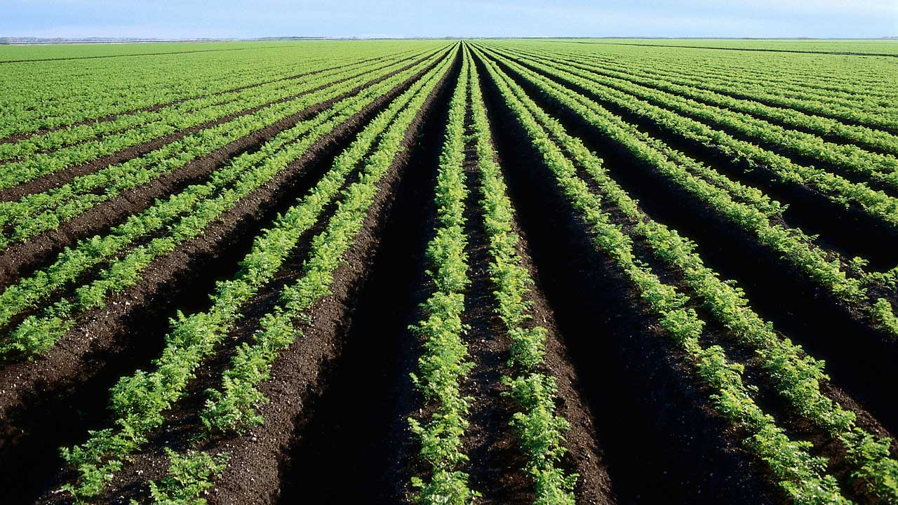 agriculture in nigeria We provide essential information on agriculture in nigeria to the farmers & agribusiness we aim to help grow agriculture industry and business in nigeria.