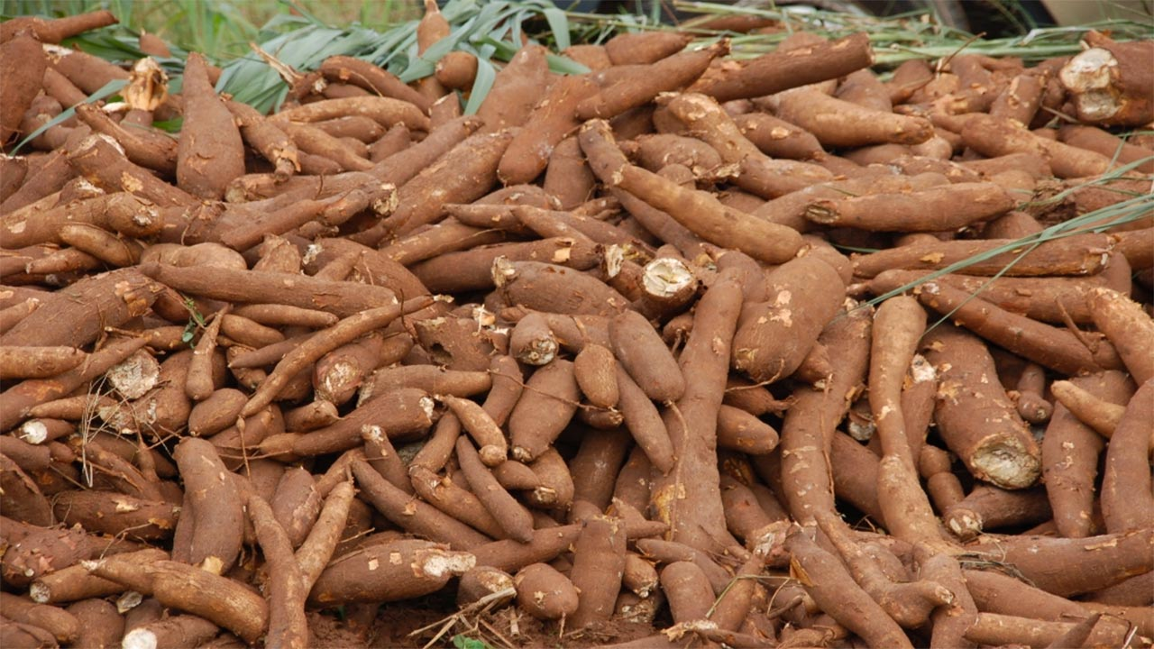 FG may impose levies on imported starch to drive cassava