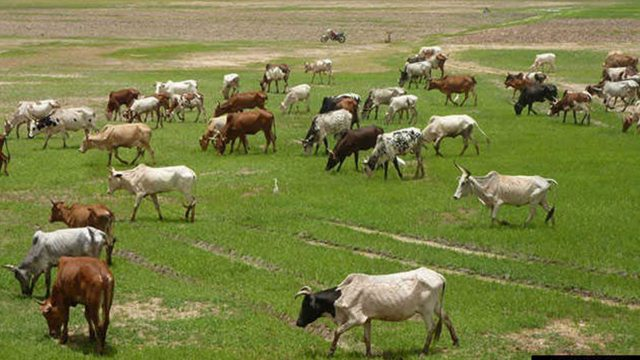 Nigerians advocate private sector-led cattle ranches, feedlots