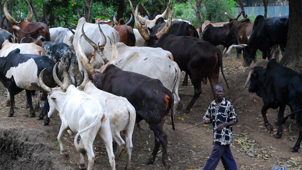 Cattle-Herdsmen