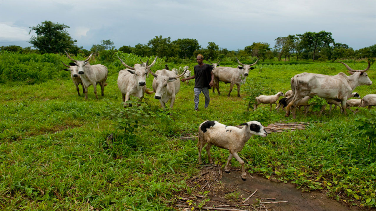 Image result for Taraba farmers rally support for anti-grazing bill