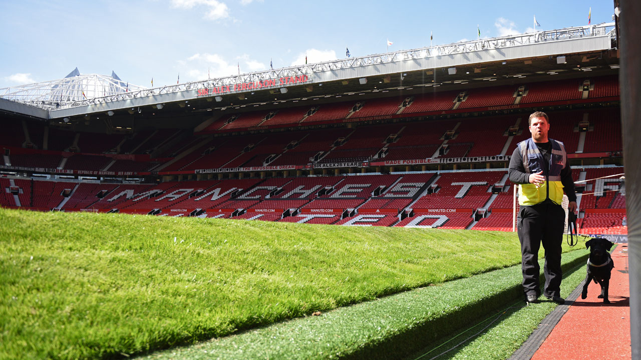 A sniffer dog works on the side of the pitch following the evacuation of Old Trafford stadium in Manchester, north west England, on May 15, 2016, after the English Premier League football match between Manchester United and Bournemouth was abandoned. Police ordered Manchester United to abandon their final Premier League game of the season against Bournemouth on Sunday after a suspicious package was discovered at Old Trafford. / AFP PHOTO / OLI SCARFF /