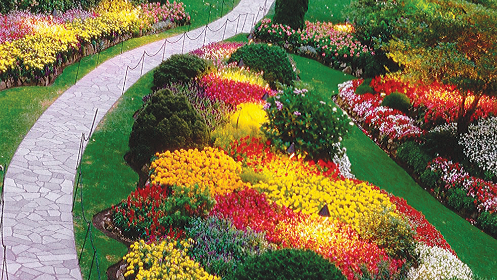 Garden Designed With Beds Of Hot Color Annuals, Durban, South  Africa.Epiphytic Orchid