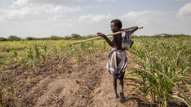 An boy walks through failed crops and farmland. PHOTO: theguardian.com
