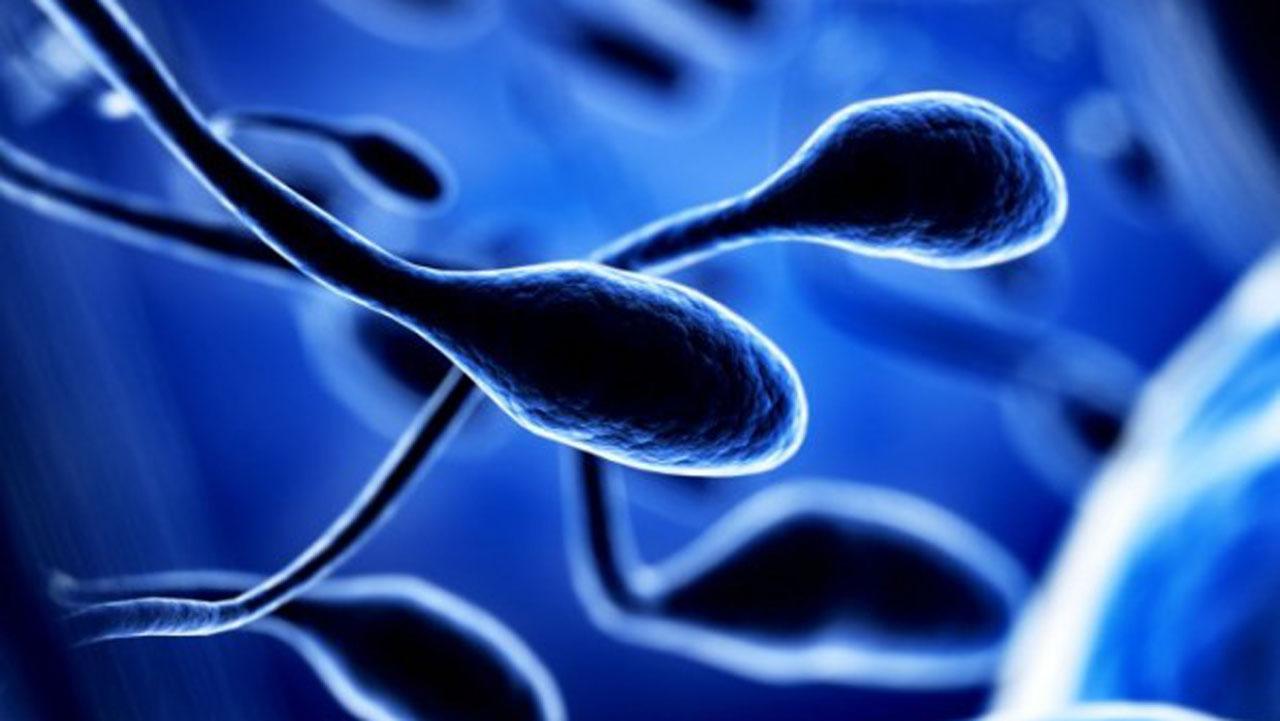 Spermcell