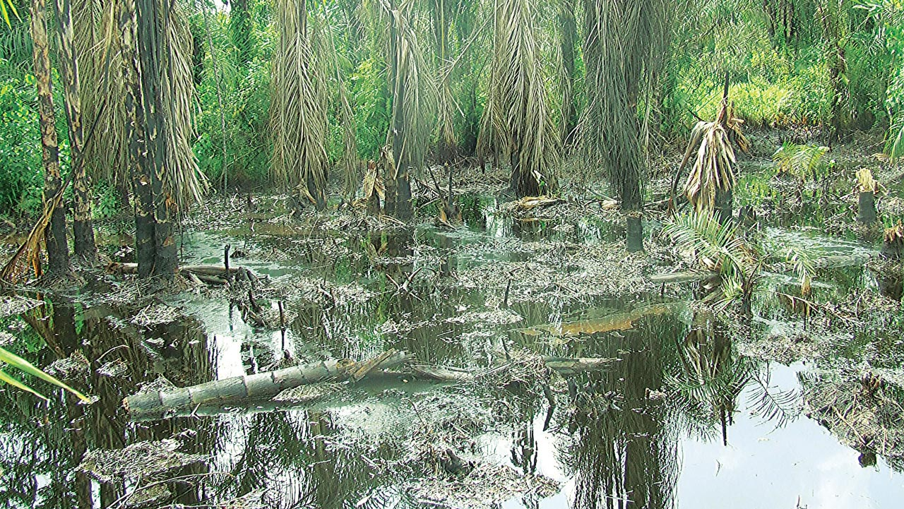 Polluted Ogoni land PHOTO:Kelvin Ebiri