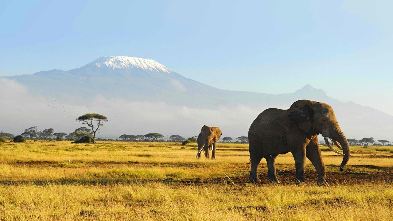 elephants-wildlife