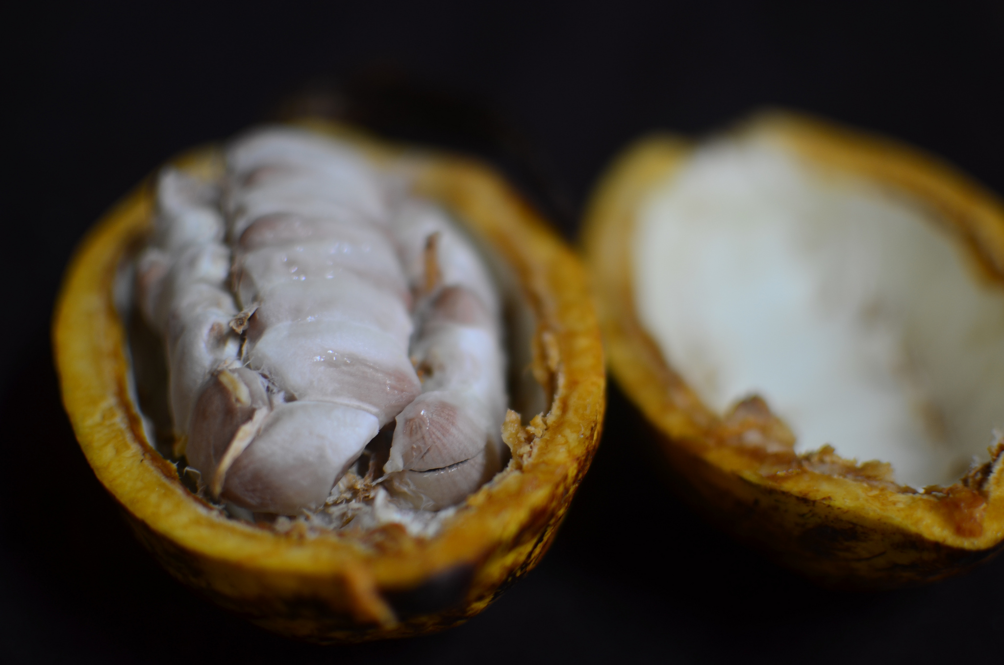 A typical Nigerian cocoa pod containing about 40 beans would produce two 60g bars of dark chocolate. PHOTO: OZOZ SOKOH.