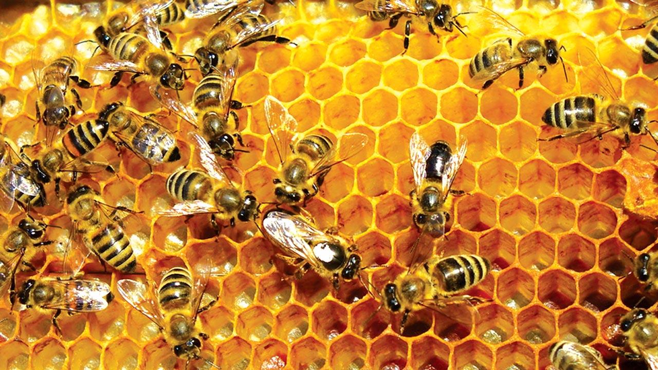Honey-24-7-16++