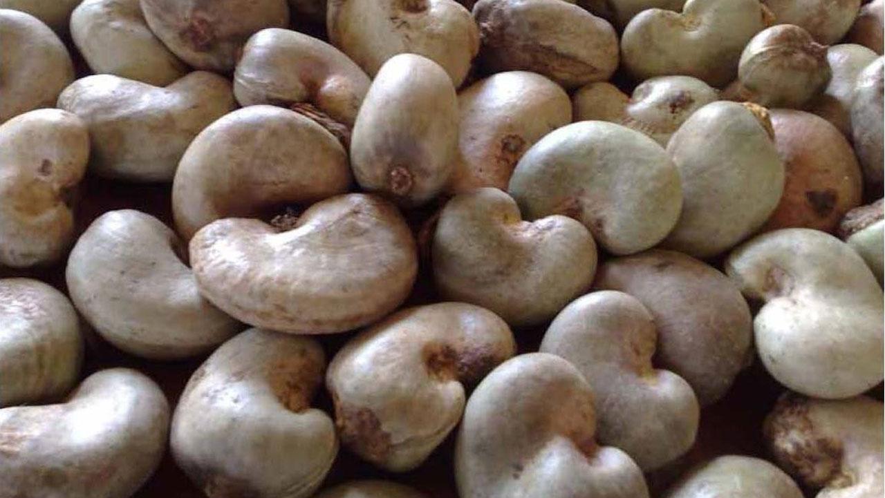 Cashew Nuts.