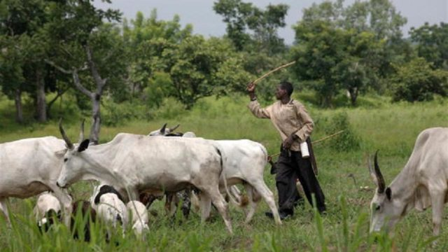 Ekiti plans enclosed grazing, ranching to stop farmers, herders' clashes