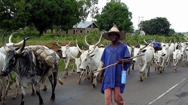 Imo police confirm arrest of herdsman with arms - Guardian