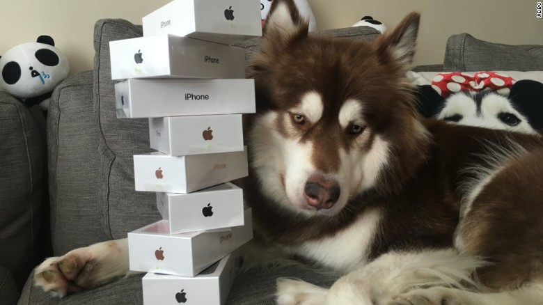 Man bought his dog eight iPhone 7s