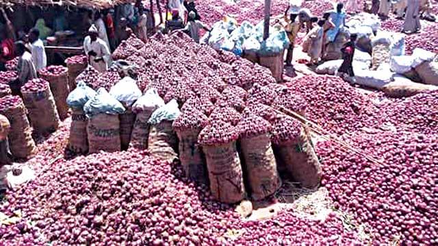 Onions market in Aliero, Kebbi State PHOTO: Google