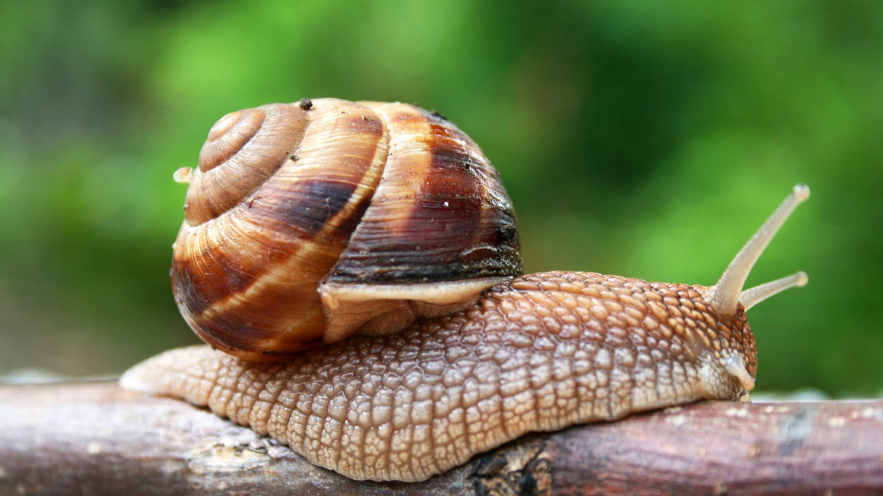 University of Utah, United States, researchers have found that the structure of an insulin molecule produced by predatory cone snails may be an improvement over current fast-acting therapeutic insulin.