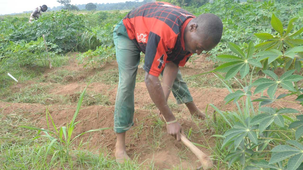 wpid-a-young-farmer-weeding-cassava-farm-jpg2