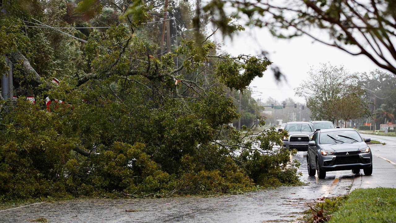 ORMOND BEACH, FL - OCTOBER 7: Vehicles drive around a fallen tree, October 7, 2016 in Ormond Beach, Florida. With Hurricane Matthew approaching the Atlantic coast of the United States, the governors of Florida, Georgia, South Carolina and North Carolina have all declared states of emergencies. Drew Angerer/Getty Images/AFP Drew Angerer / GETTY IMAGES NORTH AMERICA / AFP